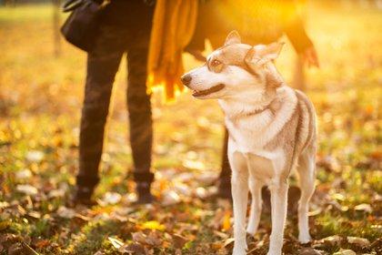Acariciar a una mascota ayuda a reducir la ansiedad