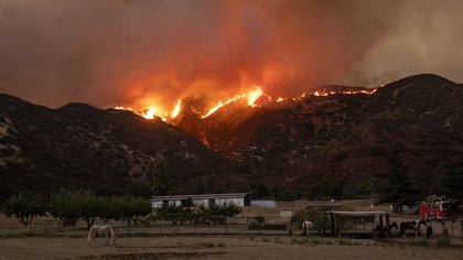 Horses graze as flames from the Apple fire skirt a ridge in a residential area of Banning, California on August 1, 2020. - 4,125 acres have burn in Cherry Valley, about 2,000 people have received evacuation orders in the afternoon of August 1,2020, and round 8pm PT the fire spread to 12,000 acres. (Photo by JOSH EDELSON / AFP)