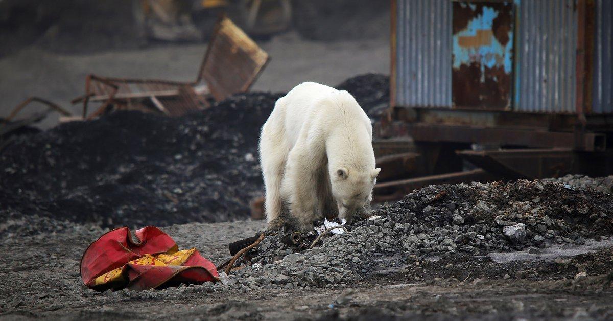 UNAM specialist revealed which species will survive climate change