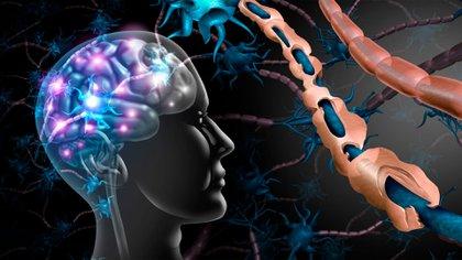 En este tipo de afecciones, el sistema inmunitario ataca las células sanas de su cuerpo por error. Las enfermedades autoinmunes pueden afectar muchas partes del organismo (Foto: Shutterstock)