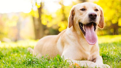 Al cumplir un año, los perros alcanzan una edad similar a los 30 de un ser humano (iStock)