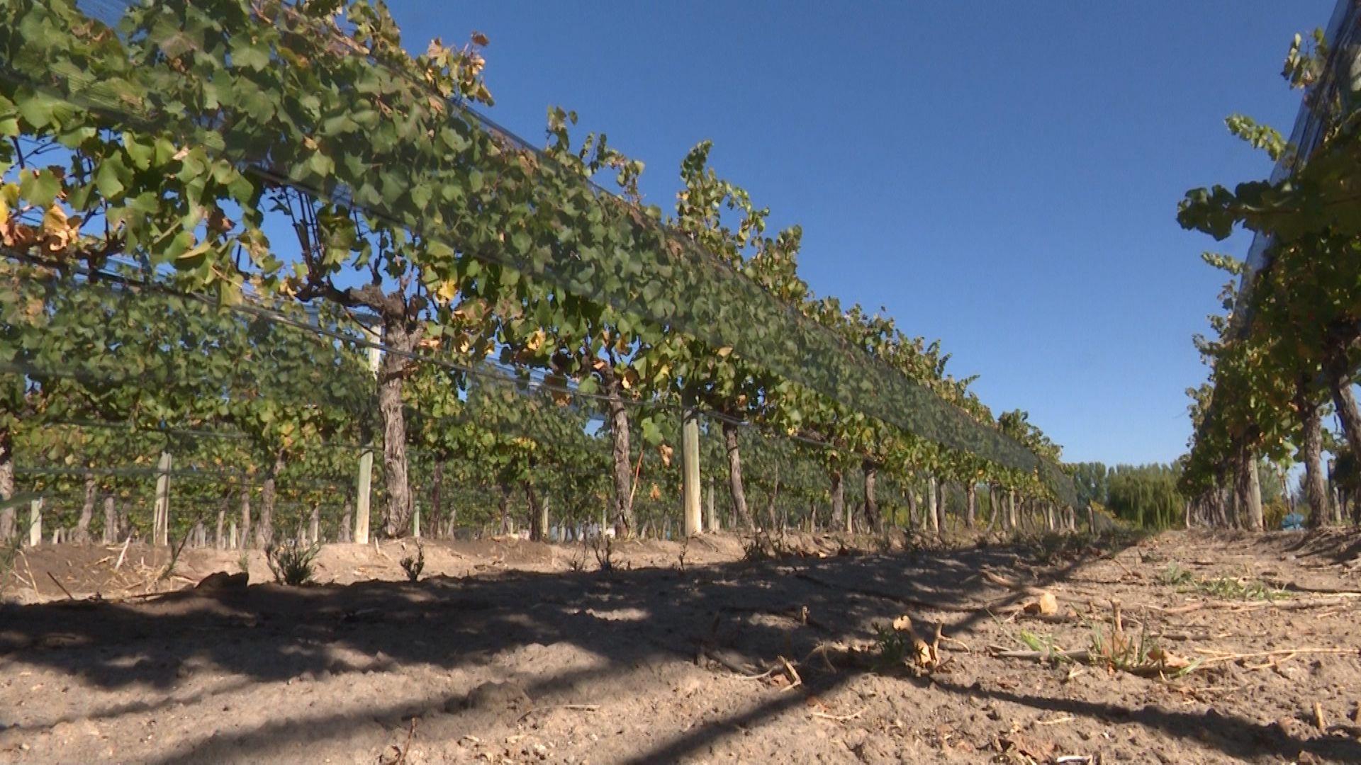 Un nuevo reclamo de la vitivinicultura para que el Gobierno elimine las retenciones a las exportaciones del sector.