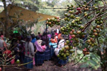 Los empleos generados por el Tren Maya usarán la mano de obra barata de los indígenas y otros sectores vulnerables, según las organizaciones   (EFE/Rodrigo Pardo)