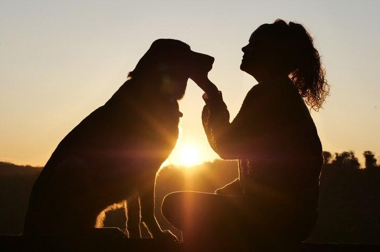 Perros muy peludos y de regiones donde el invierno es muy riguroso como el siberian husky, san bernardo, bernés y chow chow tienden a sentir más calor