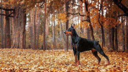 Conocidos por su naturaleza intrépida, velocidad y resistencia profunda (Shutterstock.com)