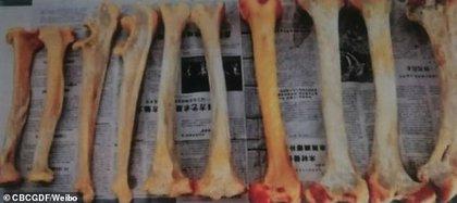 Los presuntos huesos de los tigres (Weibo CBCGDF)