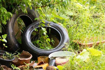 Hay que eliminar todo tipo de recipiente con agua propenso a que se crien los mosquitos (Shutterstock)