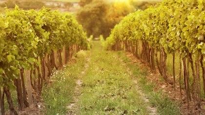 Son varios los proyectos que se están gestando a lo largo del país relacionados a la producción agrícola, ganadera, forestal y de turismo (Istock)