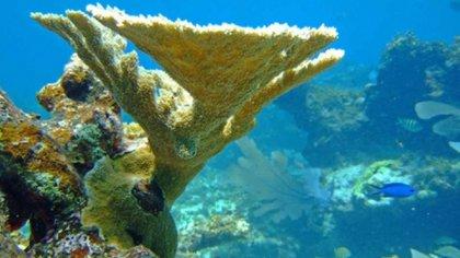 Ecosistema coralino en el Archipiélago de San Andrés, Providencia y Santa Catalina. Foto: Coralina.