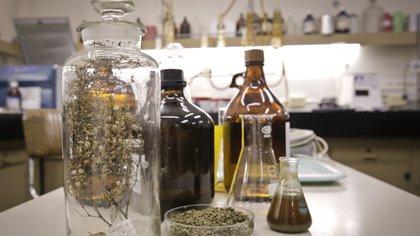 La acción terapéutica del revolucionario producto se basa en las propiedades de la Larrea divaricata o jarilla hembra, un arbusto de tallos leñosos que puede hallarse en la Patagonia