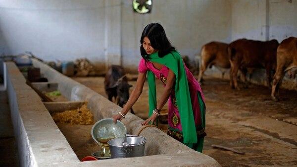 Susheela Kumari, asistente que destila orina bovina en un tinglado cerca de Nueva Delhi (Bloomberg)