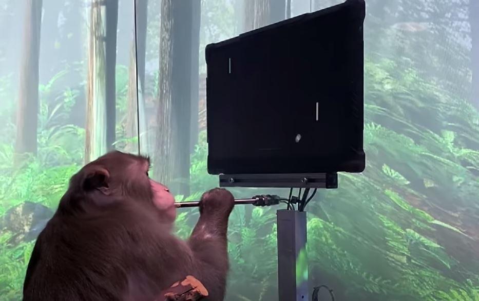 """Una nueva investigación en monos muestra que las """"neuronas de la abuela"""" pueden existir después de todo NEURALINK/YOUTUBE"""