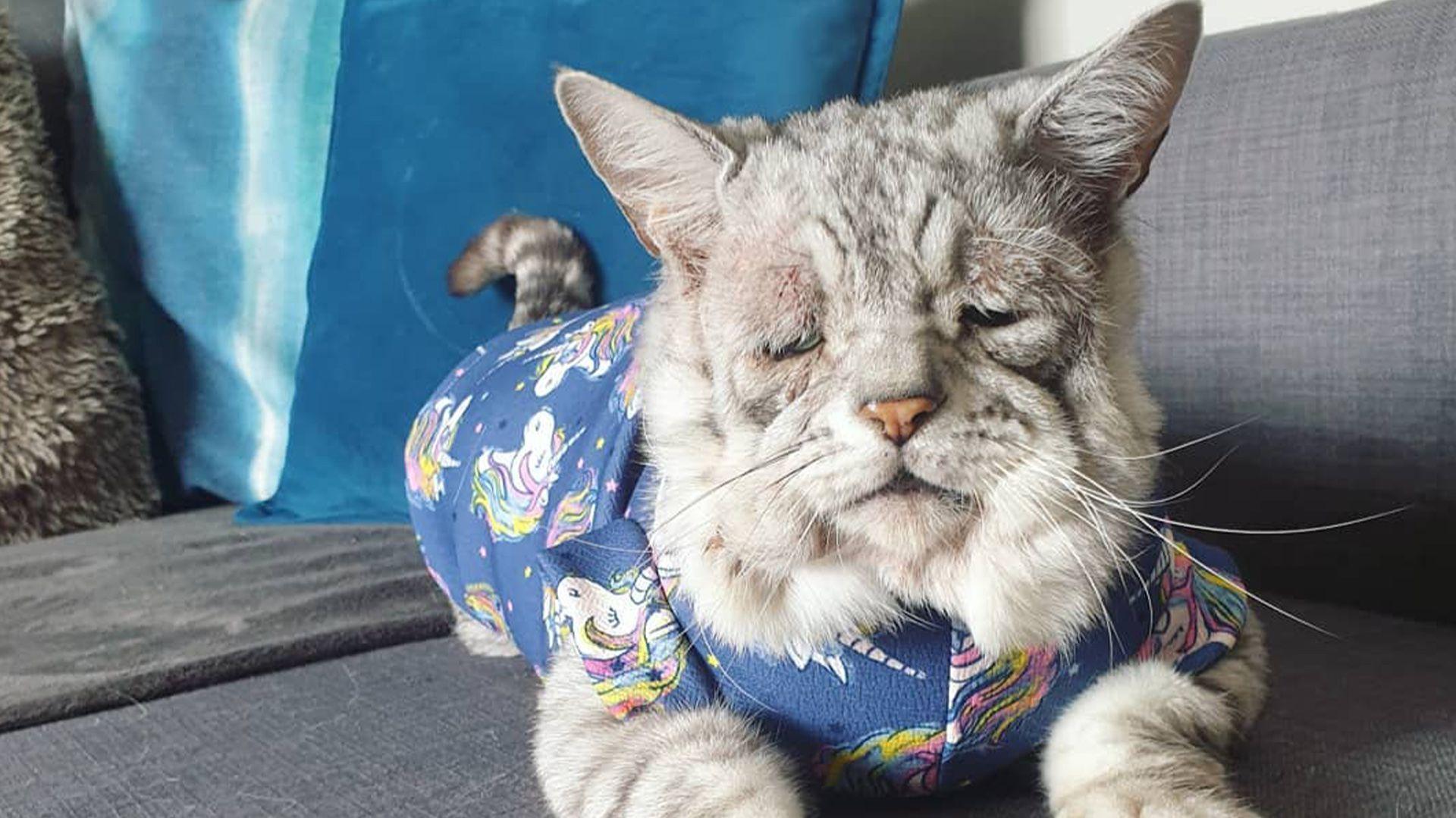 A pesar de su aspecto, el minino es muy feliz, aseguran sus dueños (Foto: tummyandgummy/Instagram)