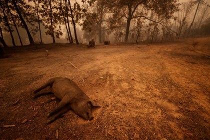Un animal muerto en Berry Creek, California, U.S.September 9, 2020. REUTERS/Fred Greaves