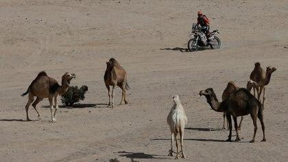 Mirjam Pol quitó la vista del camino para ver a los camellos durante el recorrido - REUTERS/Hamad I Mohammed