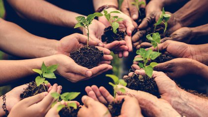 En la cooperativa Creando Conciencia comenzaron siendo 6 socios y actualmente trabajan 53 familias (Shutterstock)