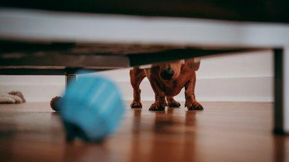 Aislamiento por COVID-19: 20 consejos sobre el cuidado de los animales en casa