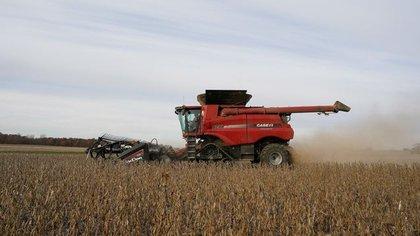 La soja saltó casi 50% del precio de la soja a lo largo de 2020 y superó los USD 450 la tonelada (REUTERS/Bryan Woolston)