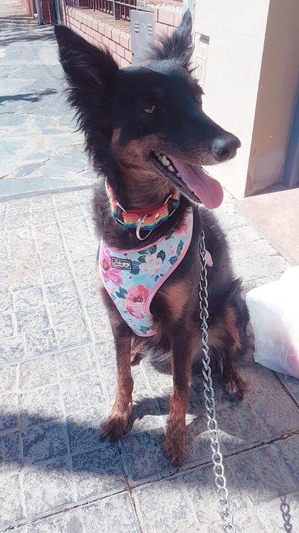Agustina no ve a su perrita hace dos meses, la espera con ansias