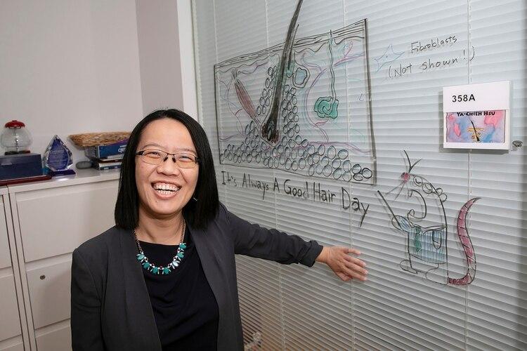La autora principal, Ya-Chieh Hsu, muestra un diagrama de un folículo piloso (Jon Chase/Harvard)