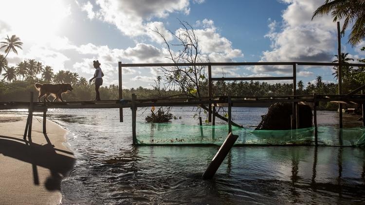 Una mujer y un perro permanecen en un puente con una red colocada debajo para tratar de impedir que el crudo llegue a un río después de un derrame de petróleo en la playa de Imbassai, municipio de Mata de Sao Joao, estado de Bahía (AFP)
