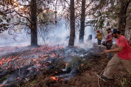 Más de 2 mil hectáreas fueron afectadas en las últimas horas (REUTERS)