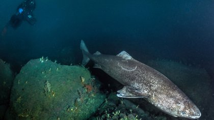 Arrecife coralino (AFP)
