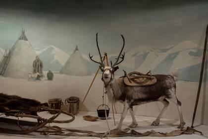 Una exposición en el Museo de Arqueología y Etnografía de Yakutsk muestra cómo era la vida de los pueblos indígenas en Sajá. Varias tribus que durante siglos han criado renos están amenazadas porque el calentamiento global descongela el permafrost. (Emile Ducke/The New York Times)