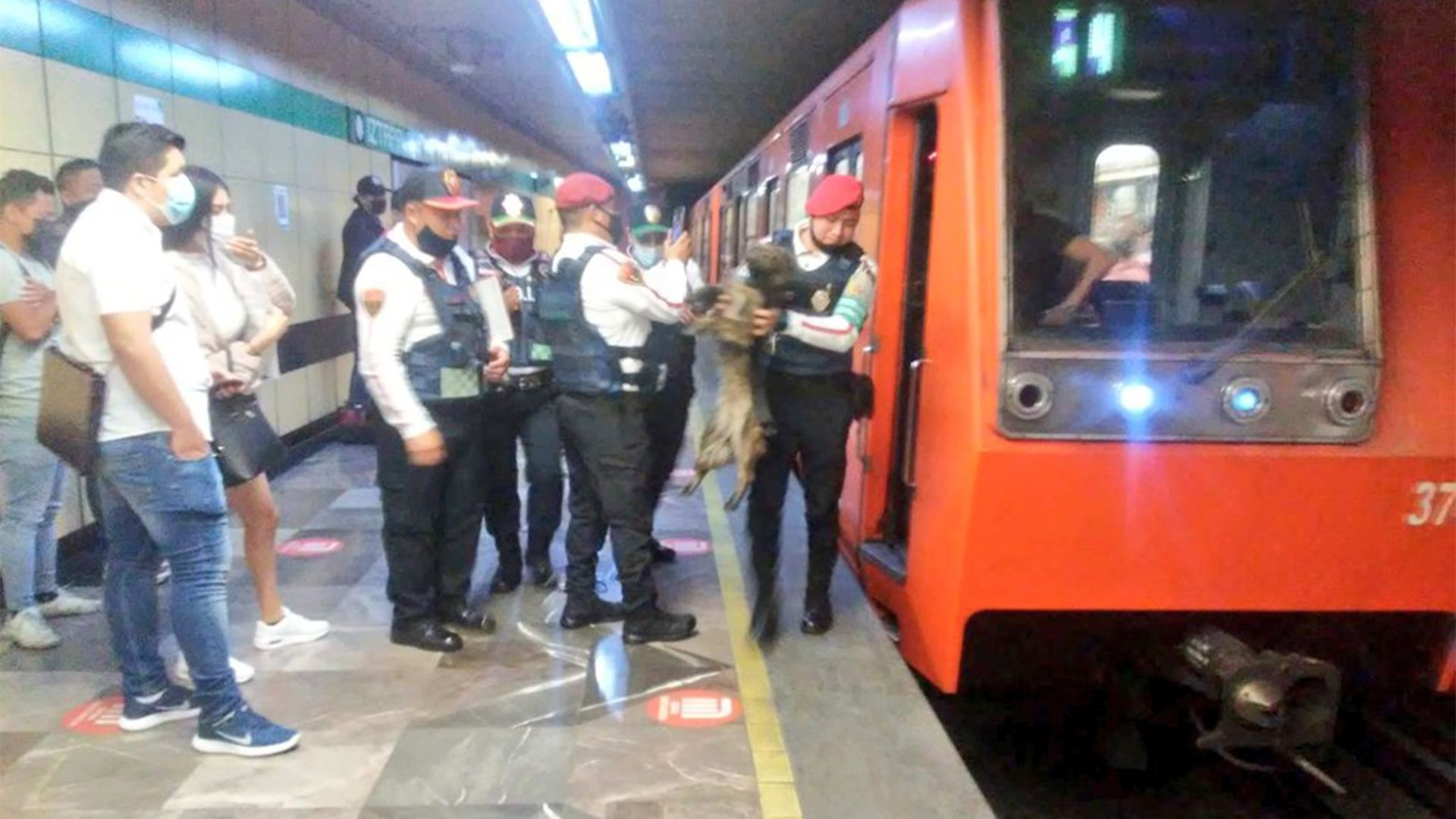 Perro rescatado metro (Foto: Twitter@MetroCDMX)