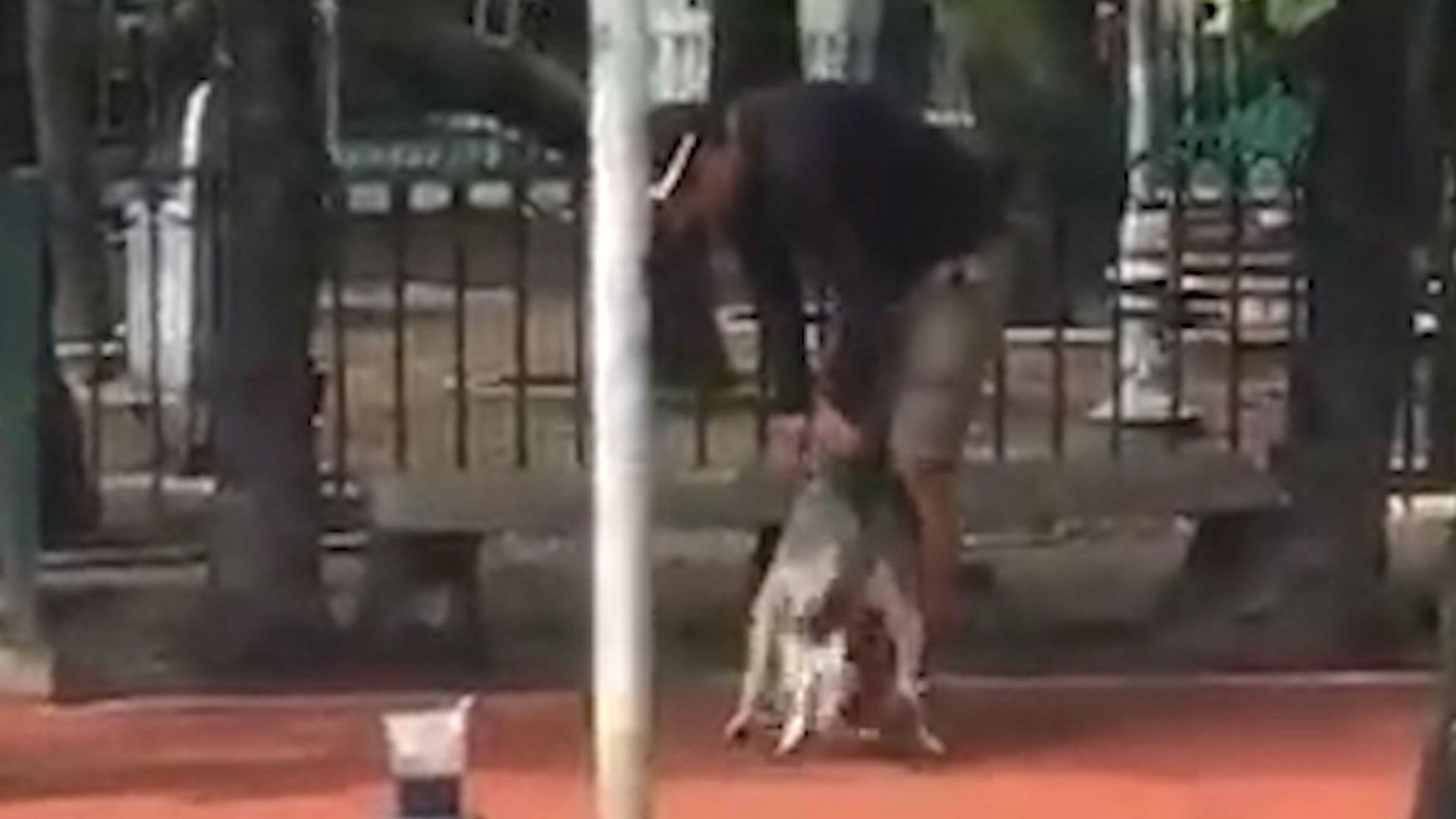 El entrenador levantó al perro del piso en distintas ocasiones (Foto: captura de pantalla)