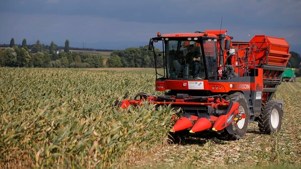 Debido al déficit hídrico, la producción del maíz se estima en 39,9 millones de toneladas, cuando hace un mes eran 41,5.