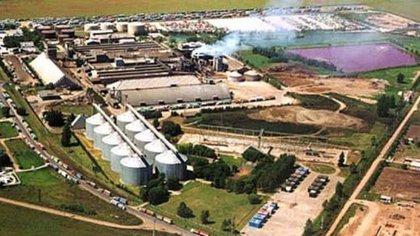 Vicentin es la principal exportadora de productos de soja procesada de la Argentina