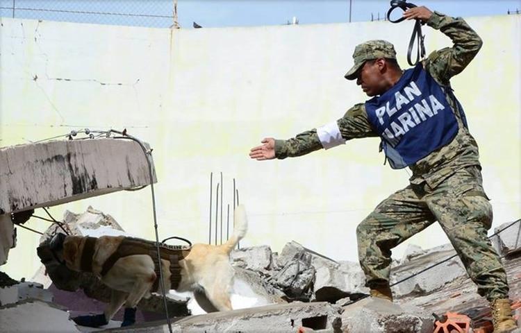 Frida participó de manera activa en la búsqueda de personas después de los terremotos del 8 y 19 de septiembre en México (Foto: Archivo)