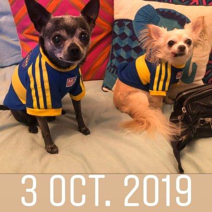 Amores perros: las mascotas de Mica tienen el corazón dividido...