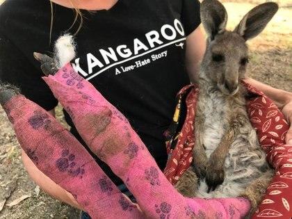 Una voluntaria de Wildlife Information, Rescue and Education Services (WIRES) sostiene un canguro rescatado de los incendios