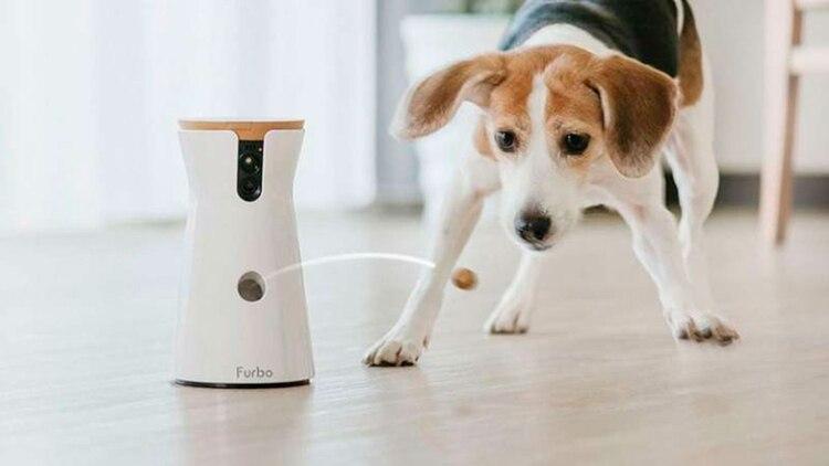 Furbo funciona como cámara y también lanza golosinas para las mascotas.