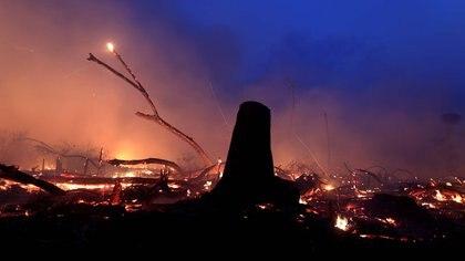 Miles de árboles quedaron destruidos por las llamas