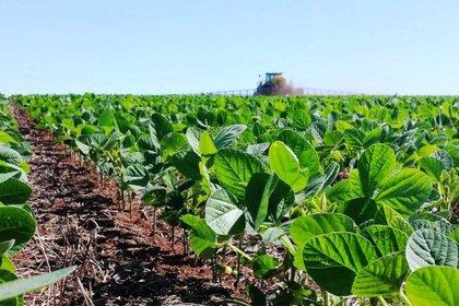 El precio internacional de la soja no detiene su rumbo alcista. Sin embargo, el productor argentino sufre el impacto de las retenciones y especialmente del desdoblamiento cambiario.