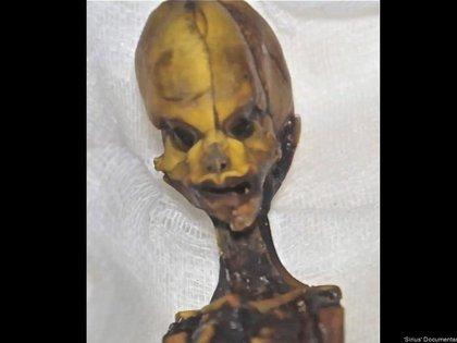 """A partir de 52 marcadores genéticos seanalizó el esqueleto en miniatura. (Documental """"Sirius"""")"""