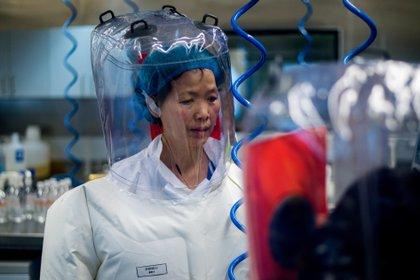 (FILES) La doctora Shi Zhengli en una foto tomada el 23 de febrero de 2017 en el laboratorio P4 del Instituto de Virología de Wuhan (Johannes Eisele/ AFP)