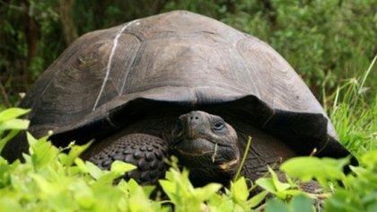 """""""La anatomía de la tortuga Pleurodira Prochelidella Buitreraensis nos brinda información acerca de cómo evolucionó el cráneo de estas tortugas a lo largo de los últimos 100 millones de años"""", especificó el paleontólogo argentino Sebastián Apesteguía (AFP)"""