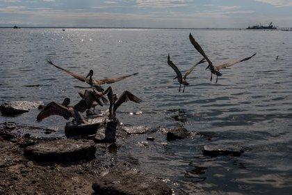 Se trata del barco Nabarima, una unidad flotante de almacenamiento de crudo que se encuentra en el Golfo de Paria, frontera entre el estado venezolano de Sucre (noreste) que pondría en riesgo la vida de muchas aves