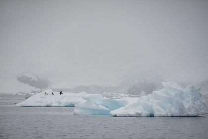 Foto de archivo ilustrativa de un grupo de pingüinos en un iceberg. REUTERS/Alexandre Meneghini