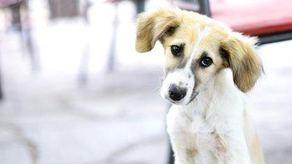 Panamá se sumó a la campaña latinoamericana de proyectos de ley para protección contra el maltrato animal (iStock)