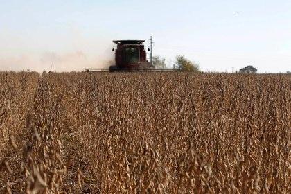 Foto de archivo: plantaciones de soja son cosechadas en un campo en Chacabuco, en la provincia de Buenos Aires, Argentina. 24 abr, 2013. REUTERS/Enrique Marcarian