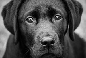 Un estudio determinó que los perros se ponen celosos cuando imaginan que sus dueños interactúan con otros animales