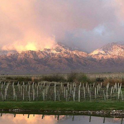 Los viñedos de Mendoza son un gran atractivo (@thevinesresortandspa)