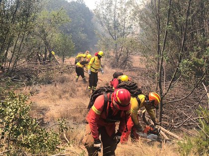 (Foto: Corporación Nacional Forestal)