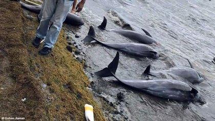 Los huracanes y las tormentas cada vez más constantes y fuertes llenan los océanos de agua dulce causando graves afectaciones a los delfines.
