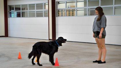 Cómo los perros rastrearon a sus humanos en el mundo antiguo